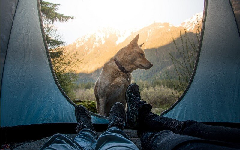 taking a dog camping for the first time