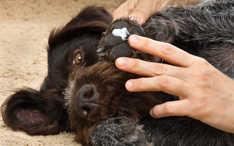 best dog paw moisturizer