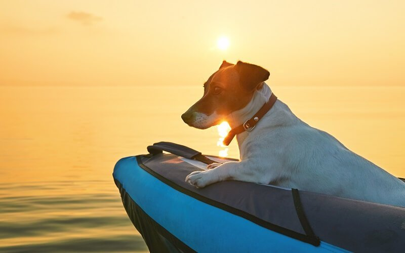 best inflatable kayak for dogs