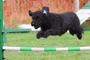 Best Dog Gate For Jumpers