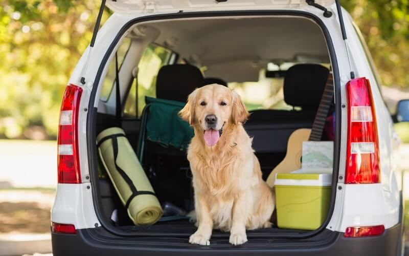 best dog ramps for suvs