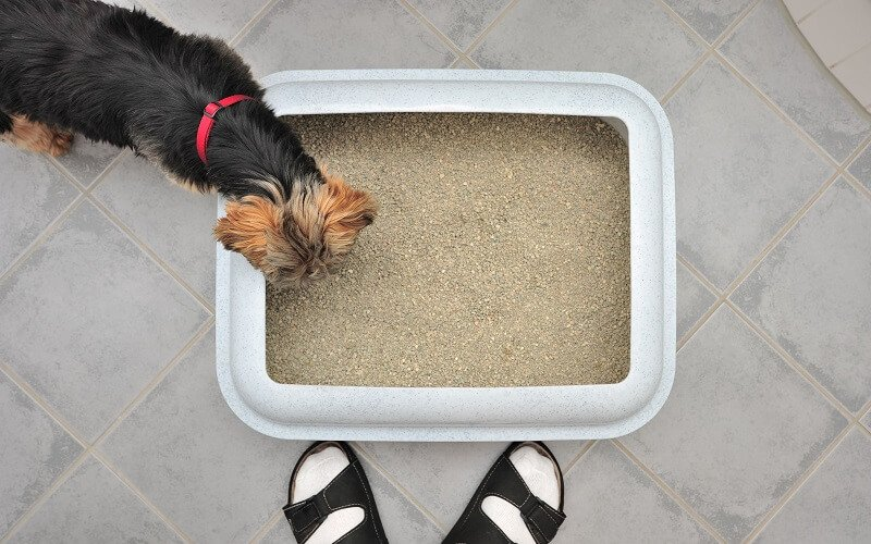 can dogs use litter boxes