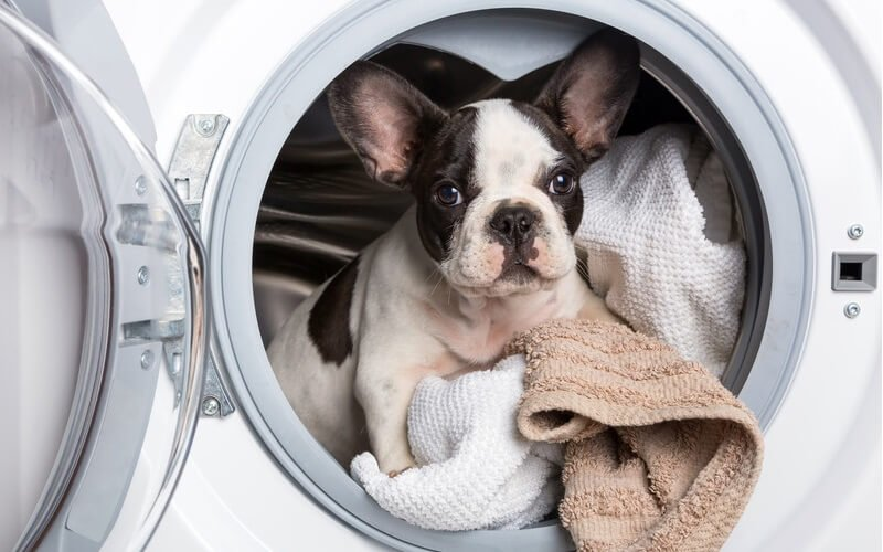 best laundry detergents for pet odor