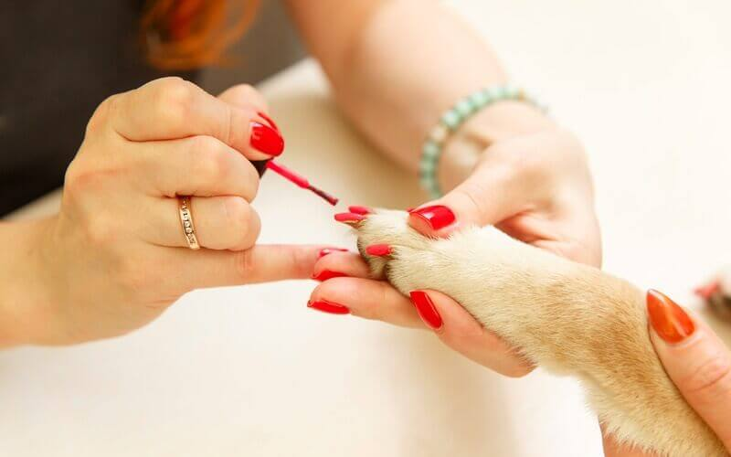 best dog safe nail polish
