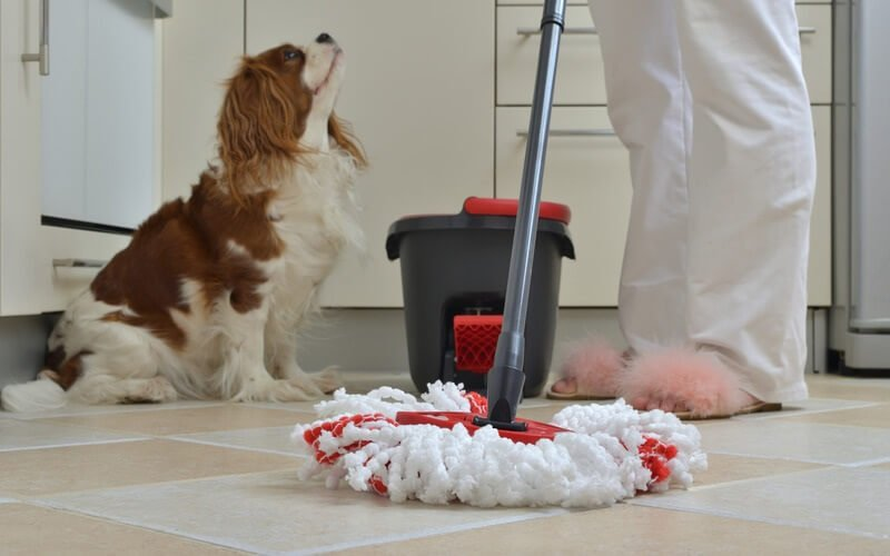 best floor cleaners for pets