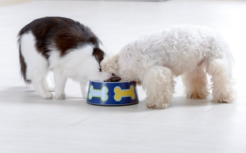 can dogs eat canned cat food