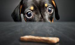 can puppies have milk bones
