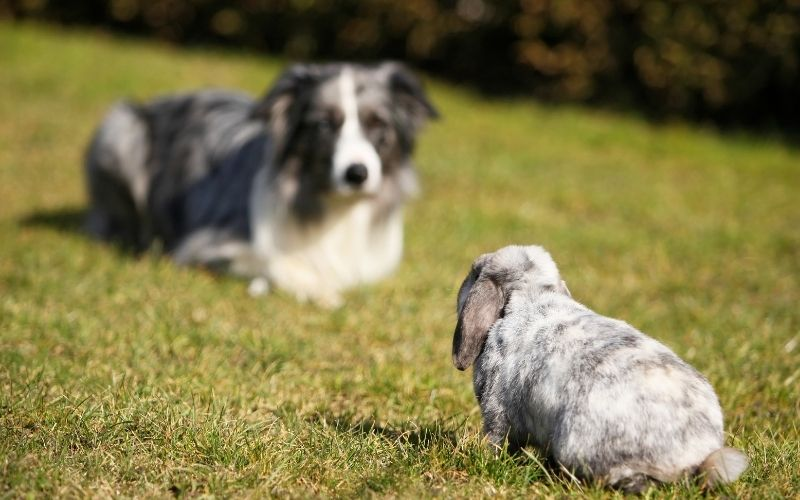 do rabbits and dogs get along