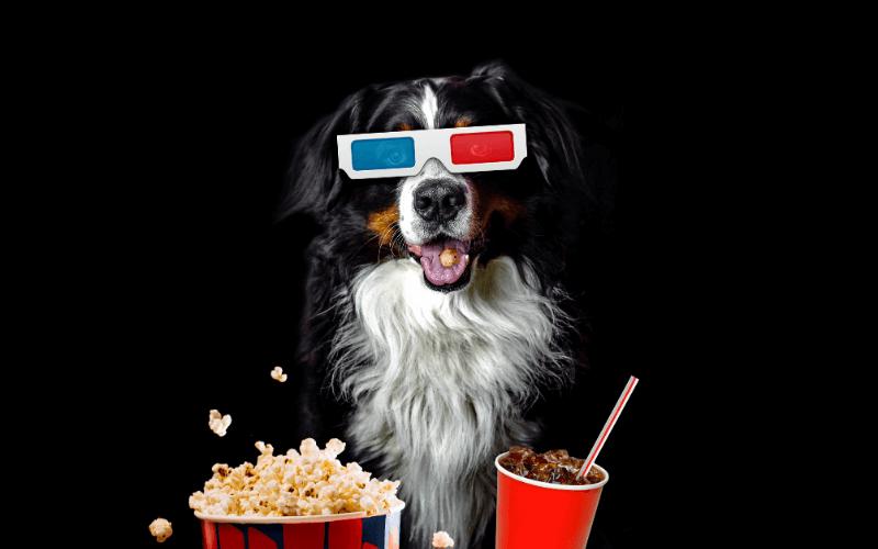 best dog movies on netflix