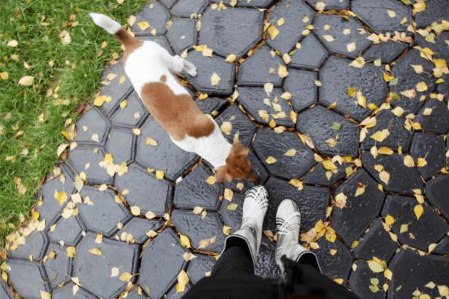should i walk my dog in the rain
