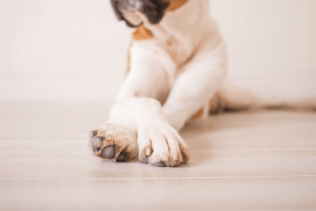 why do dogs cross their paws